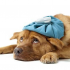 Dogs Health Problems