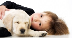 Facts About Dog Adoption