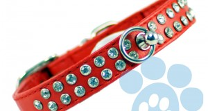 Making Your Dog Fashionable with a Rhinestone Dog Collar