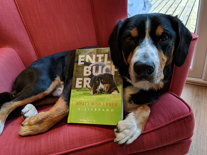 Entlebucher Mountain Dogs - What I wish I Knew