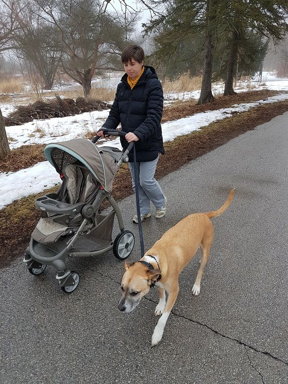 How to train your dog to walk with a stroller