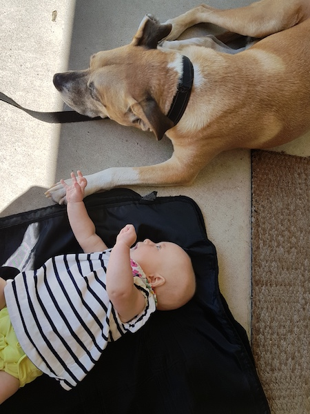 Dog and baby resources - baby Ellie and my dog Baxter