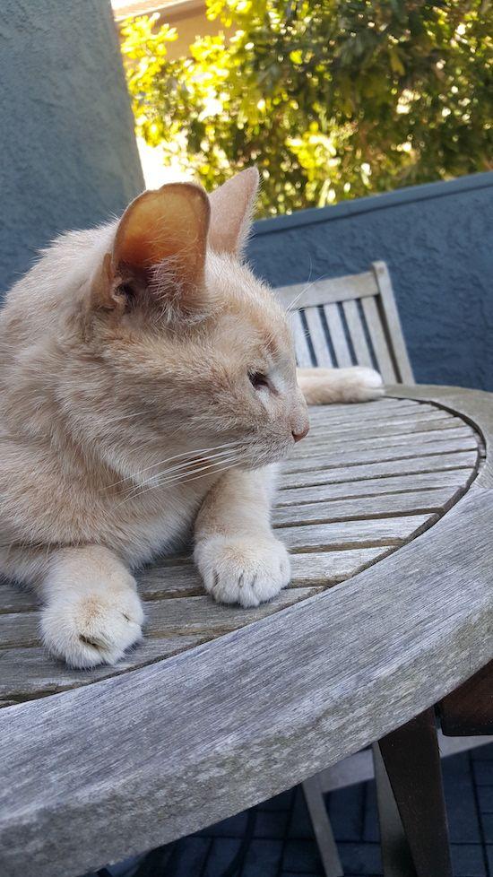 My cat Beamer