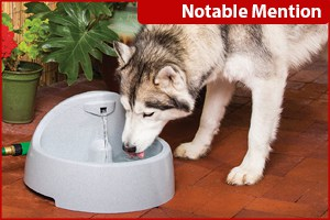 best water fountains