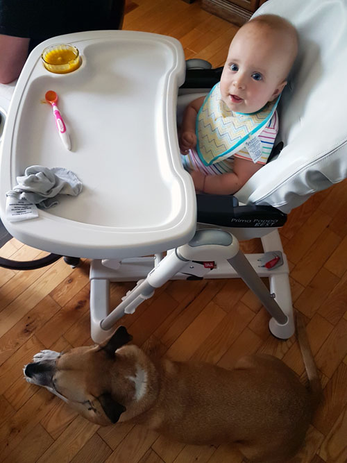 Baxter sitting under the baby's highchair - How to stop your dog's begging